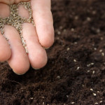 Sowing Seeds of Thanksgiving